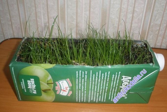 Как сделать огород из коробки от сока (мастер-класс)
