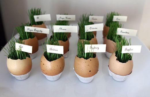 Куда посадить рассаду (идеи)