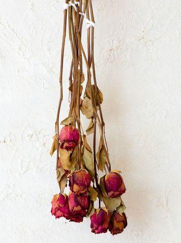 Как засушить розу